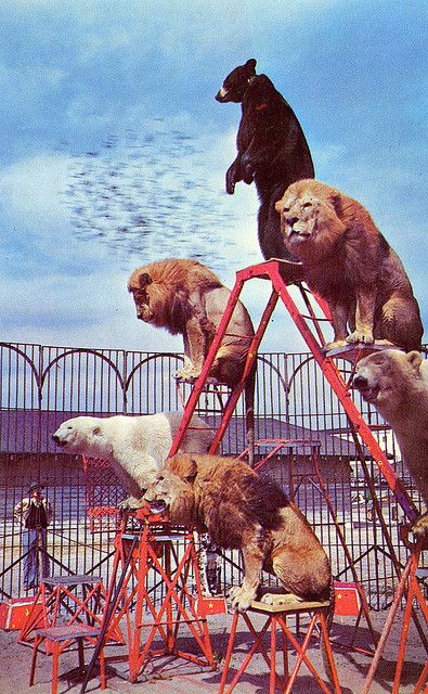 A circus is a horrible place for an animal. They deserve more than that. Google treatment of circus animals. Boycot Circus