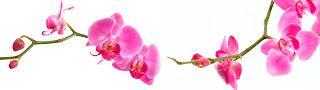 """""""GLASS"""" Обмен файлами.: Цветы. Розовые орхидеи на белом фоне , скачать бес..."""