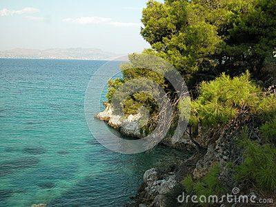Pine trees on rocky Aegean coast of Agistri Island, Greece. Taken in August 2011. Coast of neighbouring island of Aegina is visible in the background.