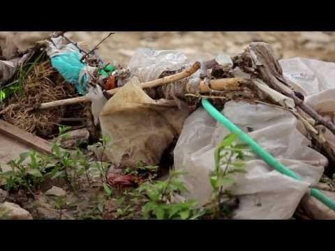 ¿Se deben prohibir o reciclar las bolsas de plástico? – ExpokNews