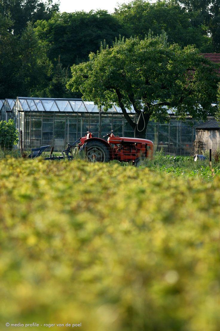 Het landelijke leven in de 3 hectare moestuin van de Historische Groentehof bevalt ons prima. www.vergetengroenten.nl