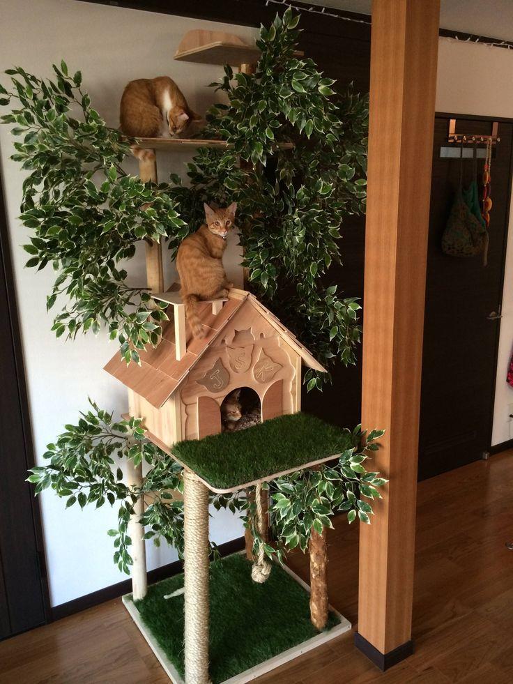 Mache einen natürlich aussehenden Kratzbaum   – Katzen Bilder