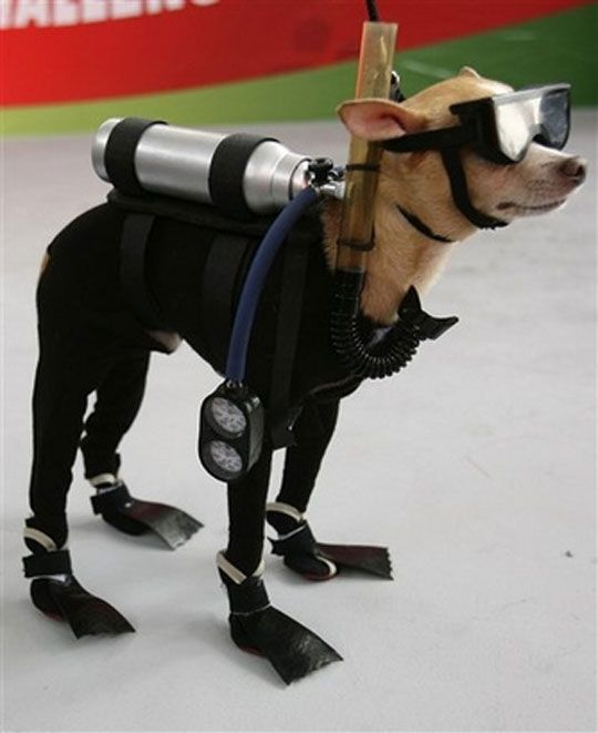 Sure go on and laugh but just wait til you see the owner in a muzzle and matching tutu