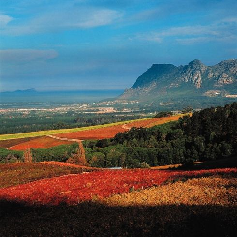 Magnificent Constantia Valley in Cape Town offers great wines, fantastic scenery and good food.