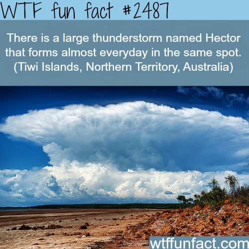 Hector thunderstorm, Tiwi Islands, Australia - WTF fun facts