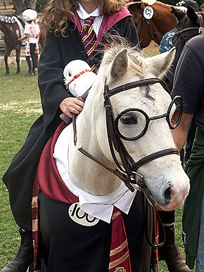This horse is dressed as Harry Potter... did you do that? Nope, the horse did it; it likes Harry Potter.