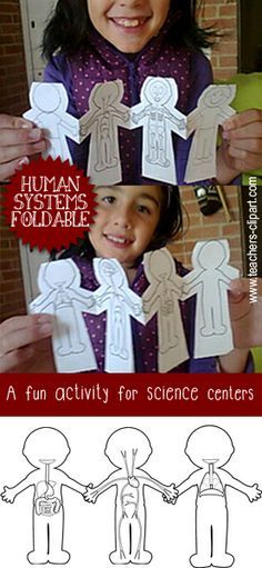 This foldable is great to teach the Human Body Systems Includes:  Nervous System…
