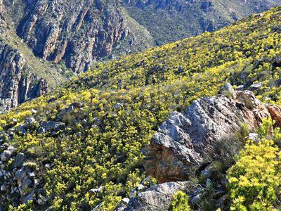 Hoerikwaggo Trail, Cape Town, South Africa. www.secretearth.com/best_lists/7-best-long-distance-hikes