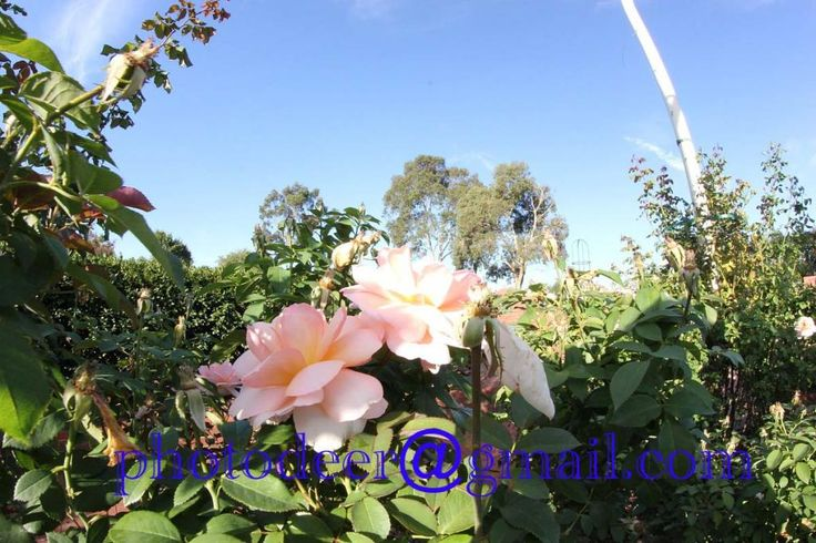 rosegarden254_zpsec11d6f4.jpg Photo:  This Photo was uploaded by photodeer1. Find other rosegarden254_zpsec11d6f4.jpg pictures and photos or upload your ...