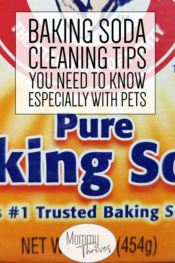 How To Eliminate Dog Urine Stains From Carpets Using Baking