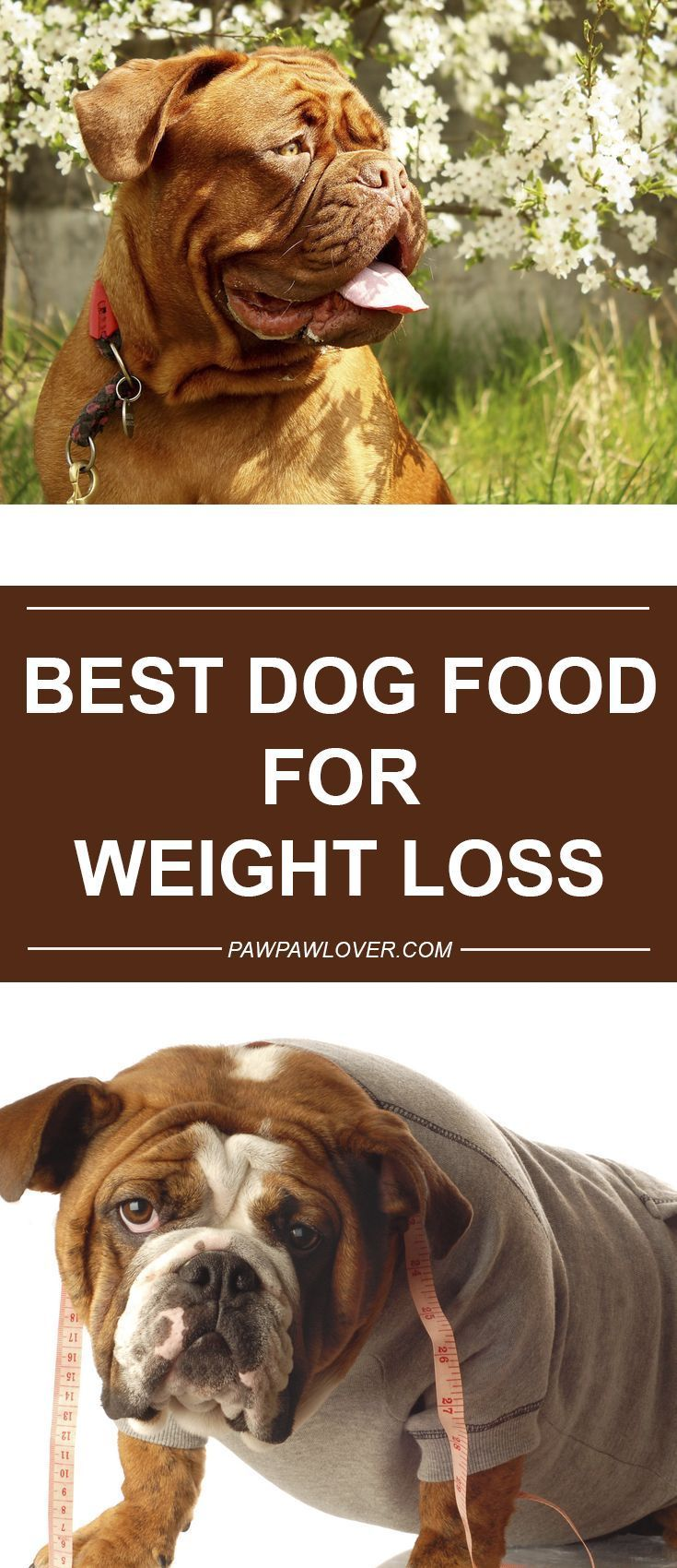 Best Diet Dog Food For Weight Loss 2018 Low Calorie Dog Food