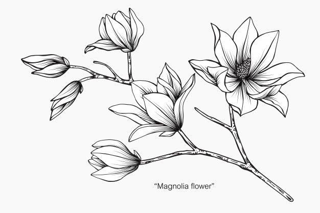Pin De Hazel En Bullet Journal Flores Pintadas Tatuaje De Magnolia Dibujos Botanicos
