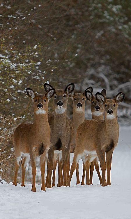 Pin by Ashwin Rajan on Four legged love | Animals, Cute animals, Animals beautiful