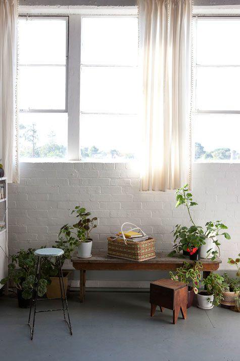 初心者用の小さめの植物は剪定もあまり必要がないので好きな高さに飾ってもお世話がしやすいです。どんなた棚でも、お気に入りがあったら置いてみてくださいね。