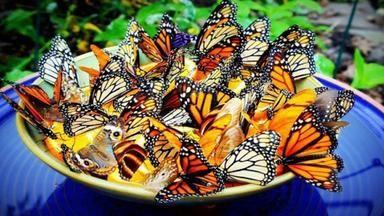 Jak přilákat do zahrady motýly