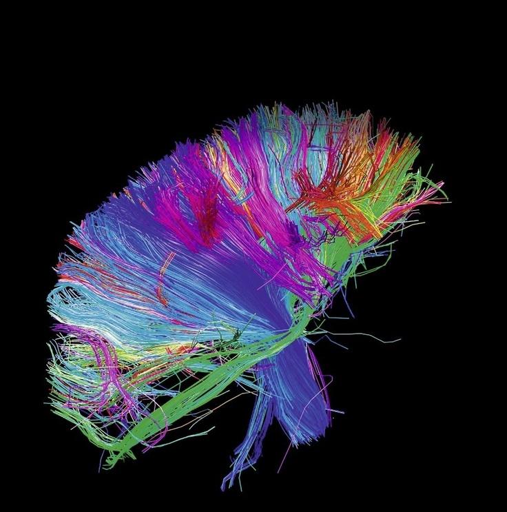 #Connectome Seit René #Decartes #cogito_ergo_sum - Ich denke, also bin ich - bleibt unklar, wie aus Materie Geist entsteht. #Connectome ist das neue Zauberwort für das komplex verdrahtete Netzwerk Gehirn. #Brainflight wird ein neues Computerspiel 2013 und zugleich wissenschaftliches Projekt sein, das online ein echtes Mäusegehirn untersucht. http://isense4u.de/isense4u_2012/Freiheit_Ratio.html
