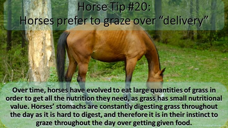 Horse tip Tuesday  #equihealthcanada #horse #firstaid #horses #ehc #tip #tuesday #tiptuesday #graze #grazing #delivery #deliver