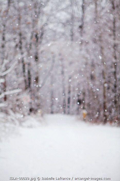 www.arcangel.com - snow-falling-in-the-forest