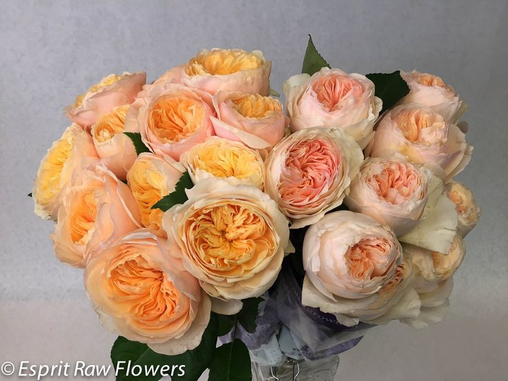 Orange Garden Rose 41 best raw garden roses images on pinterest | garden roses, david