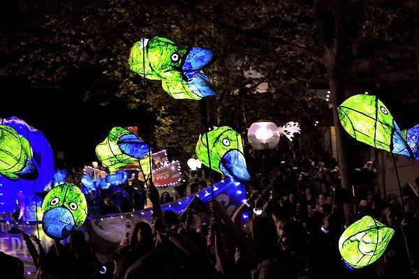 Platypus Lights