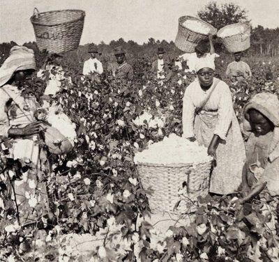African American women working in cotton fields, date unknown