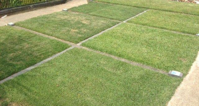 Turf on Display - Warner Landscape & Garden Supplies