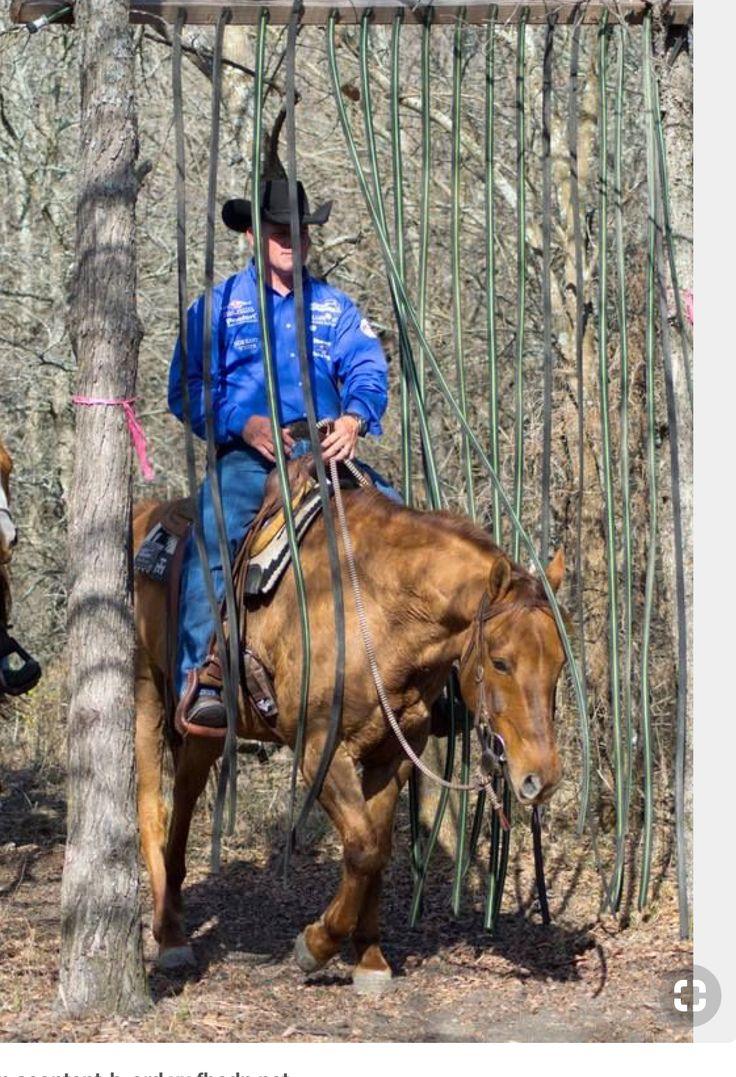 Mejores 275 imágenes de Horse obstacles en Pinterest   Caballos ...