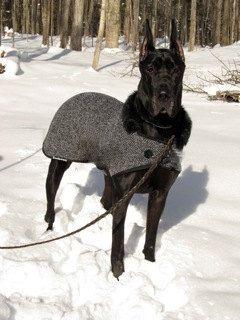 Cruzas de perros poco conocidas (parte 3)