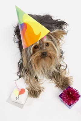 So you're looking for a way to provide your birthday pooch with a small meat cake to make the occasion special? That's sweet, even if the cake won't be. No, a meat cake might not sound too appealing to you, but your doggy is guaranteed to love it.