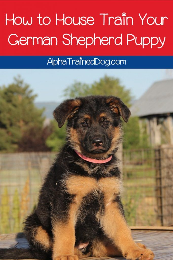10 Tips For House Training A German Shepherd Puppy Shepherd