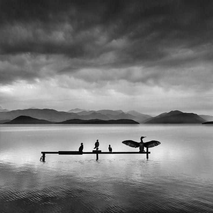 La Photographie minimaliste capte la Profondeur dramatique de la Nature en Noir et Blanc (6)