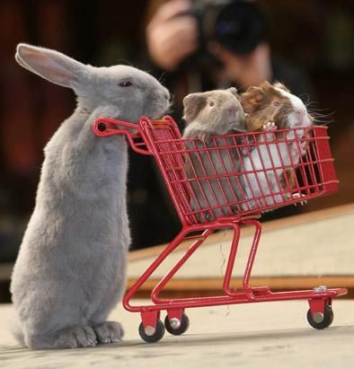 WHAT?! Adorable Animals Go Shopping
