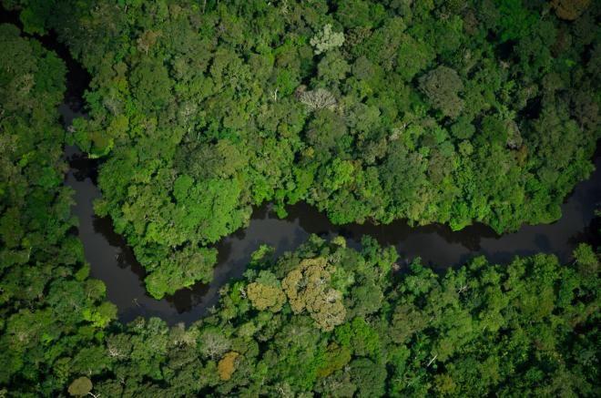Entenda a polêmica sobre a extinção da reserva mineral na Amazônia Zig Koch / WWF-Brasil/WWF-Brasil