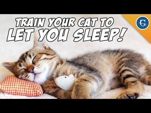 Help! My cat won't let me sleep!  Are you falling asleep at work because your cat keeps you up all night, every night? Cat behaviourist Jackson Galaxy shares his tips on how to reset your cat's body clock so you can finally get some undisturbed Zzzs.