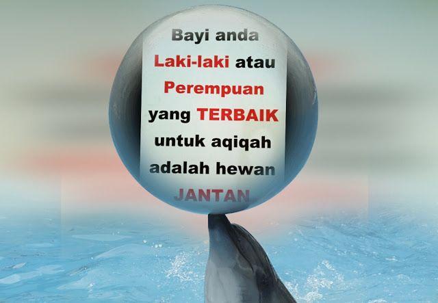 Layanan Aqiqah TERBAIK & TERPERCAYA di Kota Medan..AMANAH AQIQAH (Telp