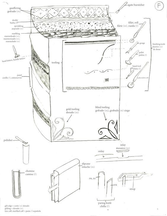 Book Anatomy Anatoma Del Libro My Friend India Johnson Created