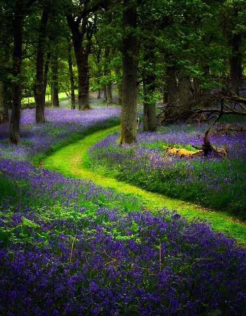 radivs: Bluebell Path... by David Mould - In a Perfect World...