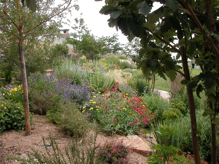 44 best front yard xeriscape images on pinterest for Xeriscape garden designs