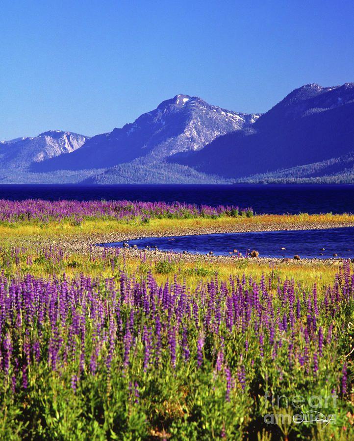 ✯ Spring Flowers - Lake Tahoe