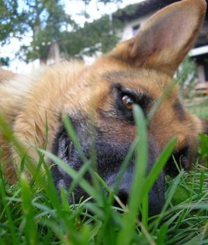 Cuáles son las plantas tóxicas para los perros
