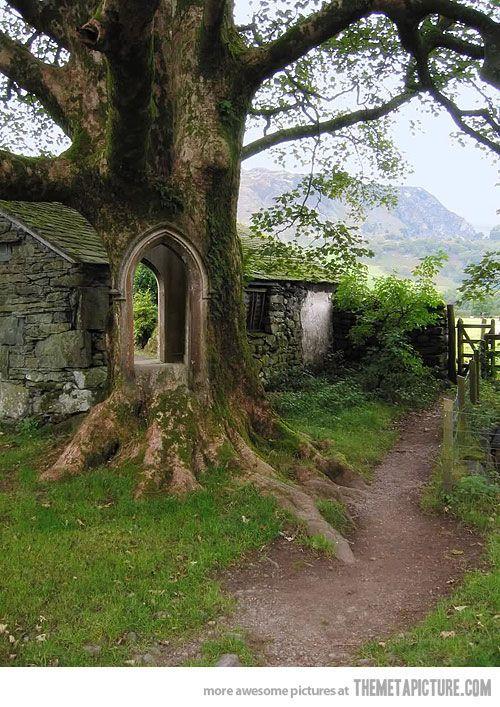 Tree Door, Ireland
