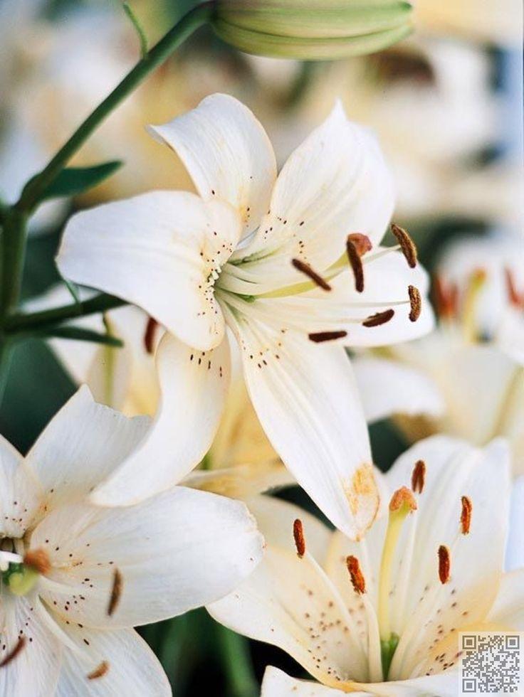 5. mai - Lily - #Janvier à décembre : 12 mois de #fleurs de naissance.…