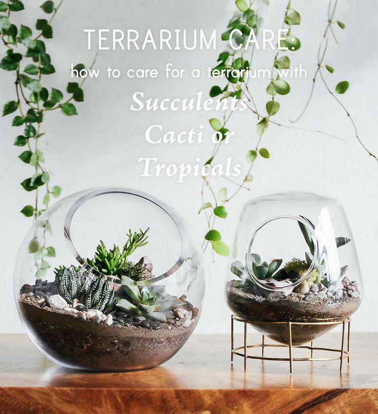 Terraium Care: How To Care For Terrariums - Pistils Nursery