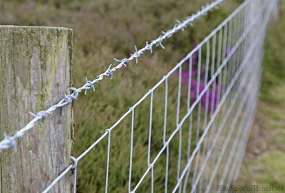 6 Options for Farm Fences - Photo courtesy iStockphoto/Thinkstock (HobbyFarms.com)