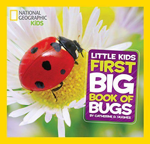 25 Bug Activities For Preschool Teacher Portfolio National