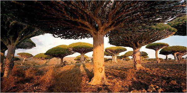 Island of Socotra - Yemen