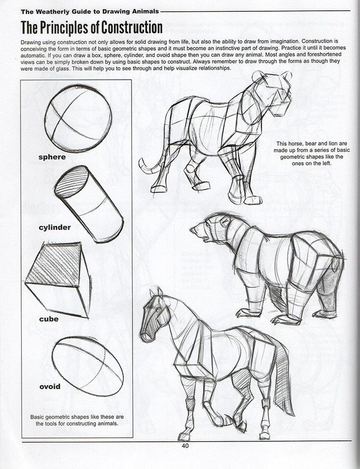 Animal Drawing Anatomy and Action for Artists Pdf 303 Best Draw