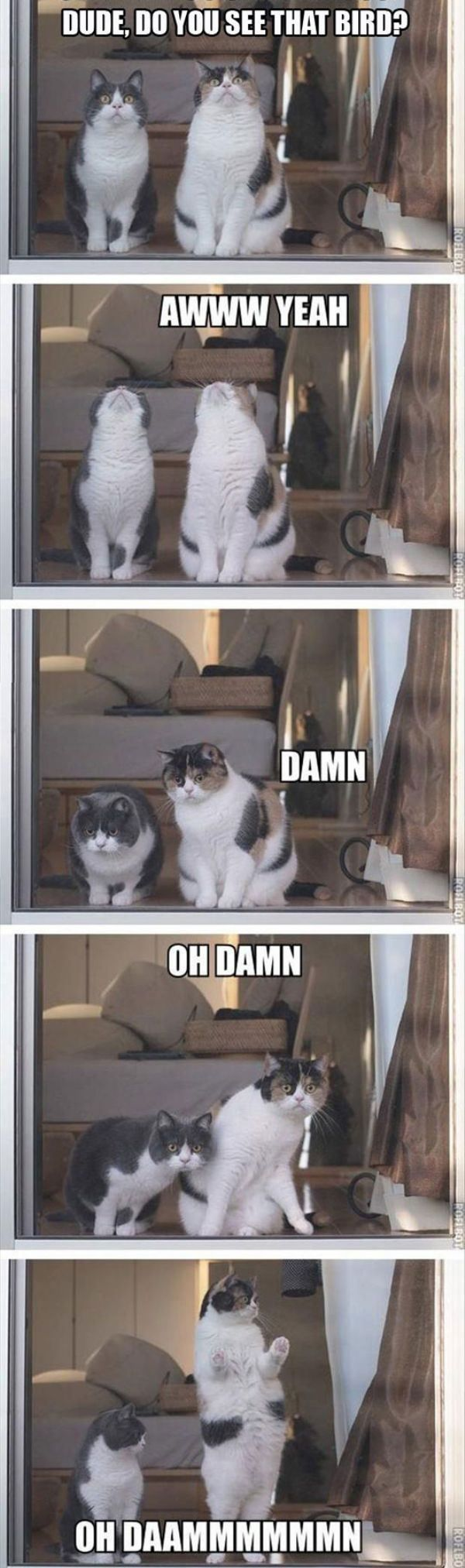 Dude did you see That Bird #Funny #cat #animal
