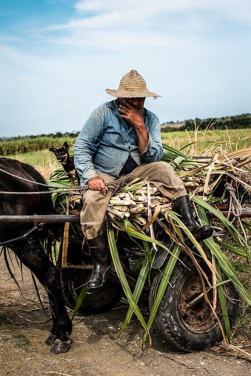 sugarcane farm, Cuba.