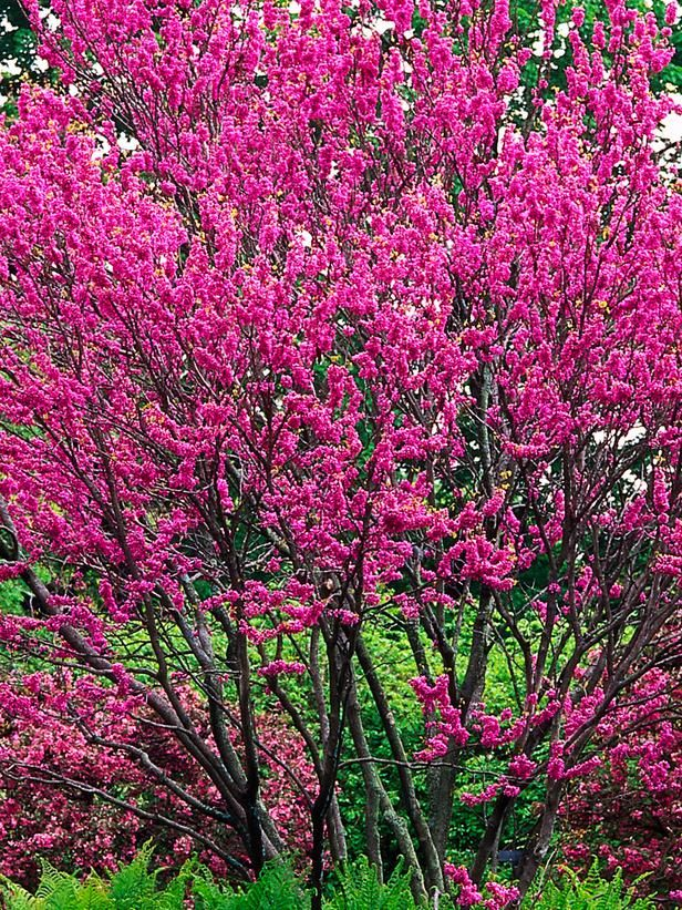 Very small flowering trees for landscaping pictures to pin for Very small trees for landscaping